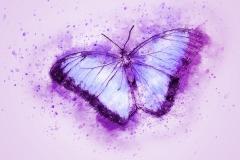 butterfly-2265010_1920