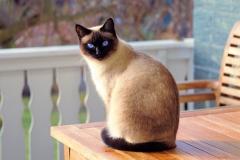 cat-2068462_1920