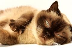 cat-3113513_1920