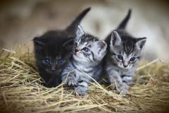 cat-3535404_1920