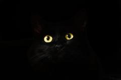 cat-eyes-2944820_1920